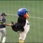 つば九郎 三輪正義選手に尾っぽ触られちょっと驚くwww