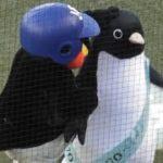 似てる?!ペンギンに興味津々なつば九郎