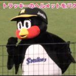 つば九郎、トラッキーのヘルメットをパクる(笑)